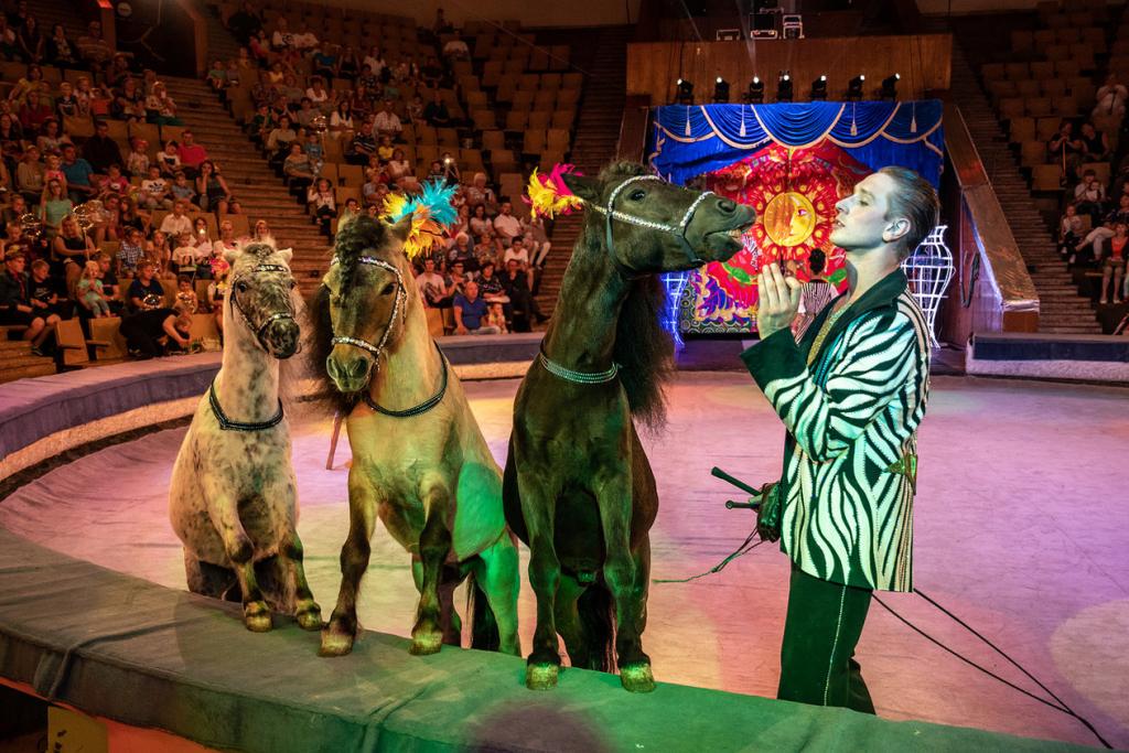 артисты цирка никулина фото причал прилегающие