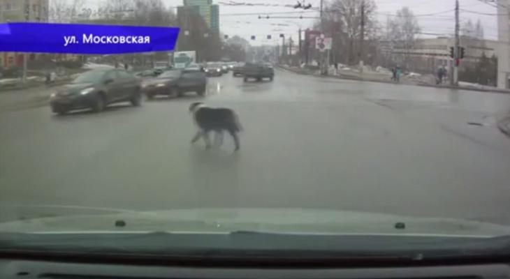 В Кирове из-за выбежавшей на дорогу собаки столкнулись два авто