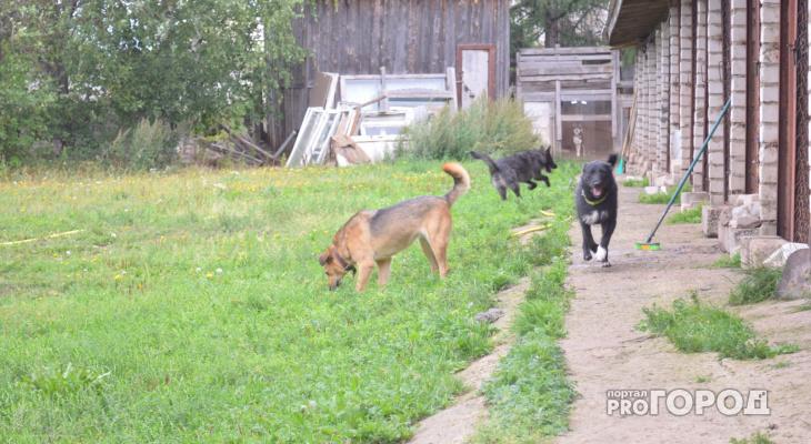 В Кирове ночью неизвестные  выпустили из приюта около 50 собак