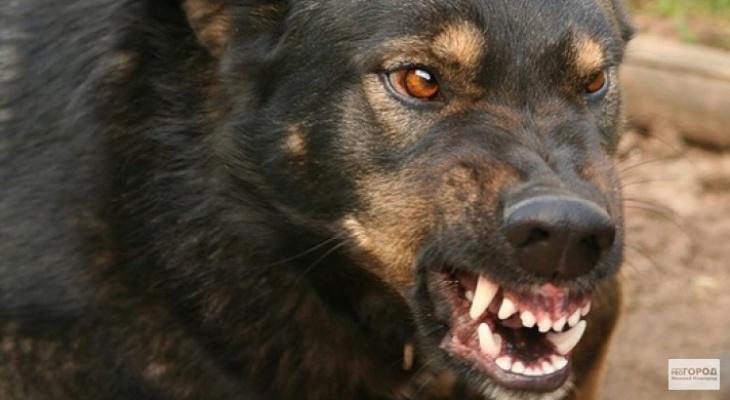 В Омутнинске полицейские застрелили напавшую на них собаку