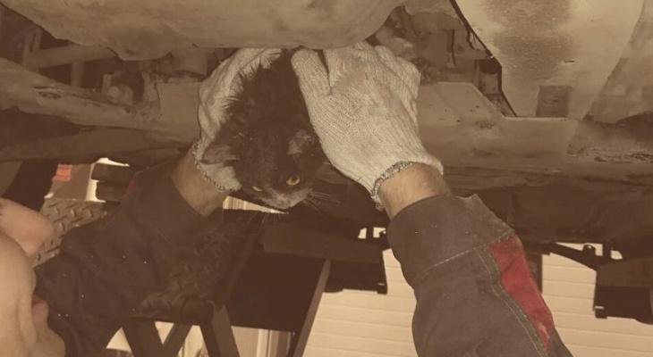 В Кирове сотрудники автосервиса достали котенка из-под защиты двигателя
