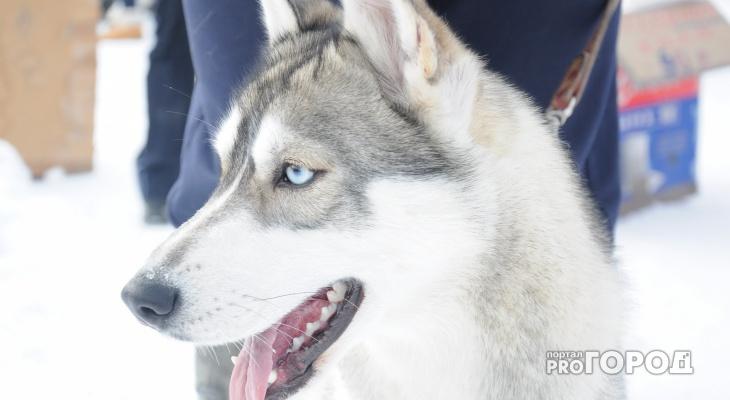 Стало известно, где в Кирове можно бесплатно привить домашних животных от бешенства