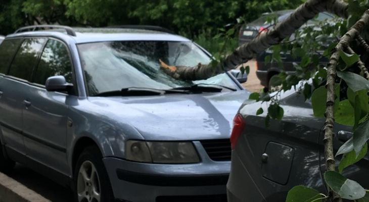 В Кирове дерево упало на припаркованные машины