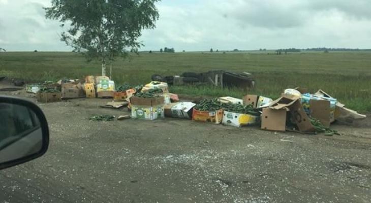 ДТП в Кировской области: на трассе опрокинулась «Газель» с огурцами