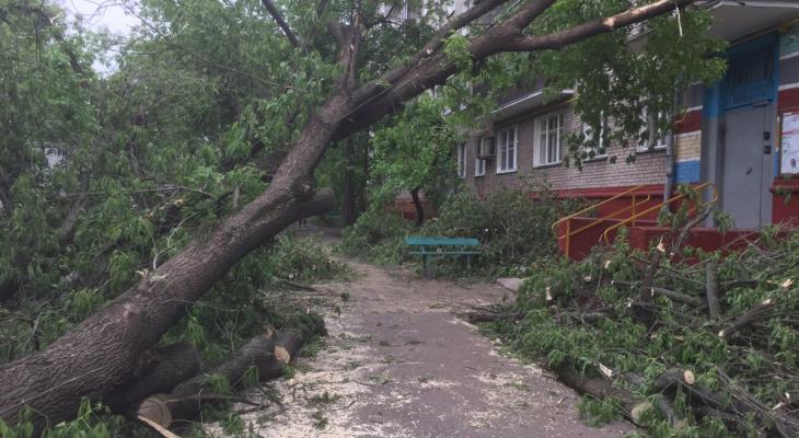 МЧС предупреждают об опасном сильном ветре в Кировской области