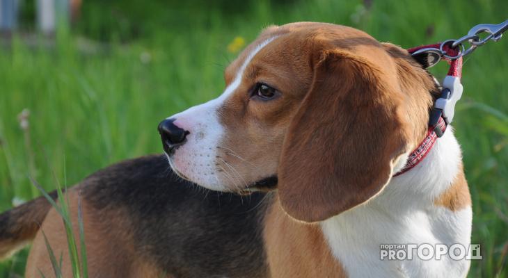 В Кировской области чипирование всех домашних животных станет обязательным