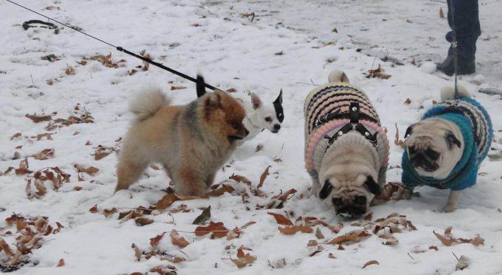 В Управлении ветеринарии пояснили, как будет работать запрет на усыпление животных