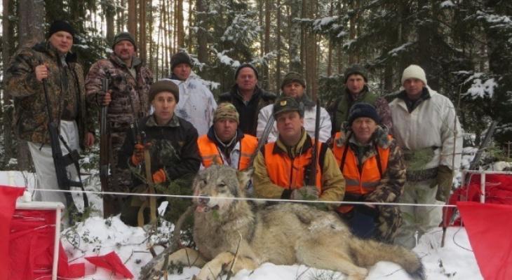 В Кировской области охотники уничтожили крупную волчью стаю
