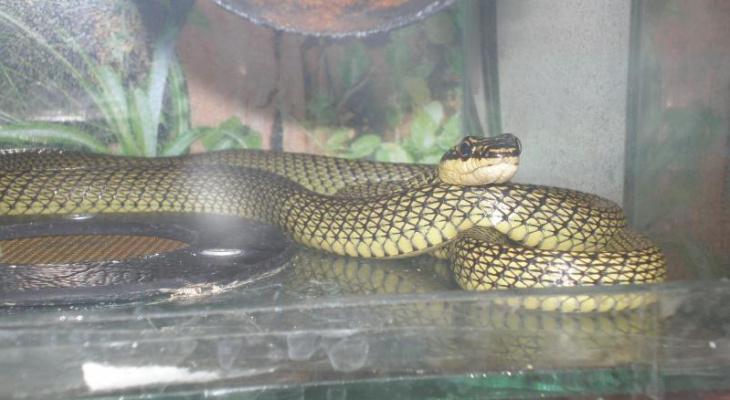 Очевидцы: в Пасегово на лыжню к школьникам выползла змея