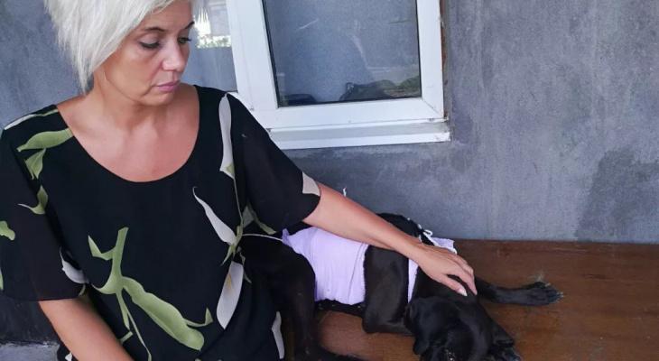 """""""Когда видишь счастливые глаза хозяина, который нашел свою собаку, - это кайф!"""": история волонтера помощи животным"""