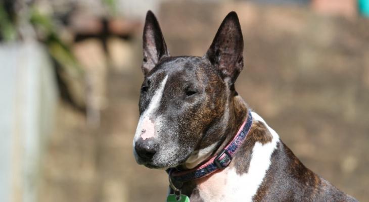 Составлен список опасных пород собак, которых нельзя выгуливать без намордника