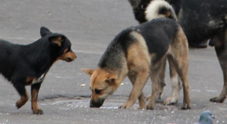 Очевидцы: «Мы услышали крики девушки с детьми и увидели, как на них напала свора собак»