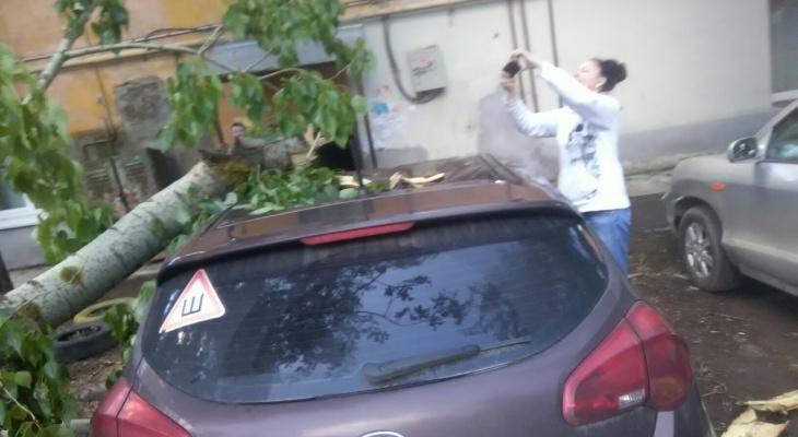 На улице Дзержинского деревом придавило машину