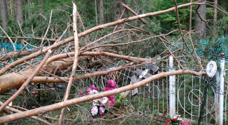 В Кировской области ураган повалил десятки деревьев на могилы и памятники
