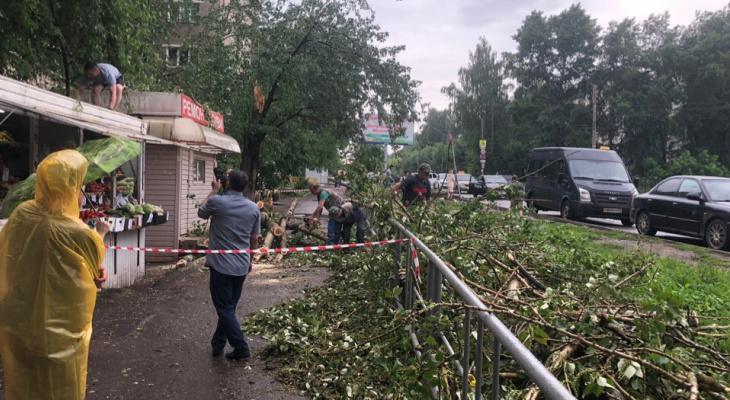 Известно состояние пешехода, на которого упало дерево во время урагана в Кирове