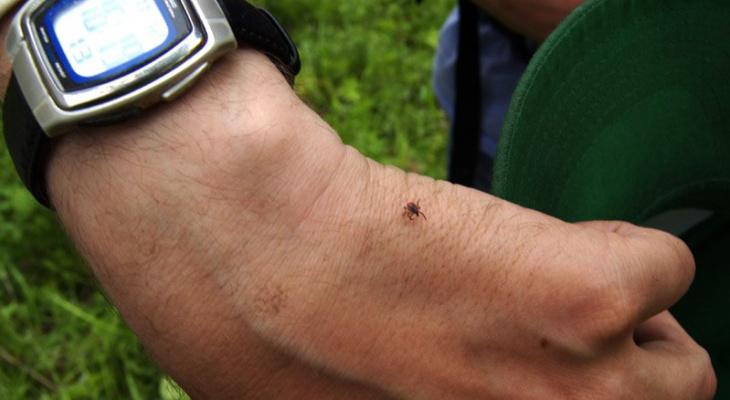 Названы районы Кировской области, где жители чаще всего страдают от клещей