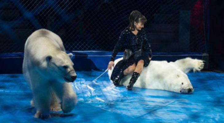 Зрители называют одной из лучших новую программу в Кировском цирке