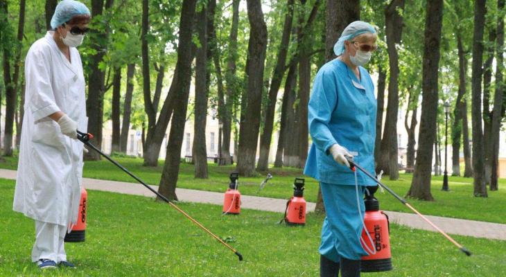 В Кировской области жителей стали чаще кусать клещи