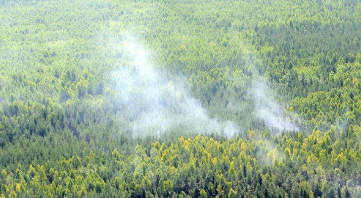 В Кировской области предупредили о  пожарной опасности в лесах