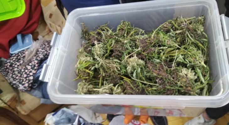 В Кирове «накрыли» мужчину, который два года выращивал наркотики в чужом гараже
