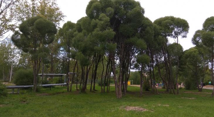Парк в Лянгасово: администрация Кирова рассматривает инициативу местных жителей