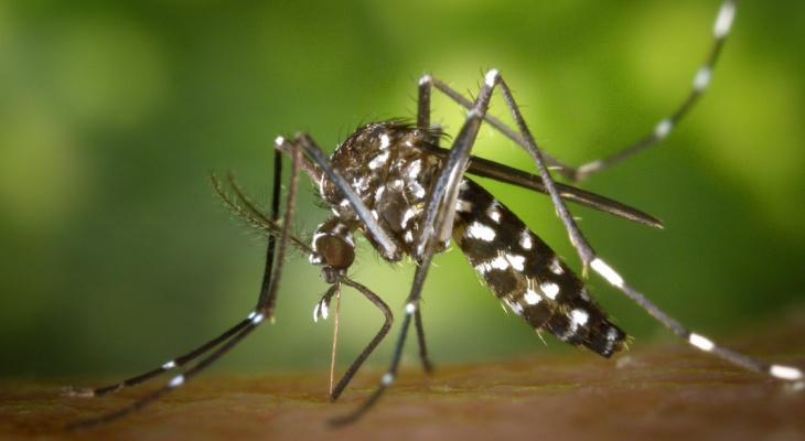 В России появились смертельно опасные комары
