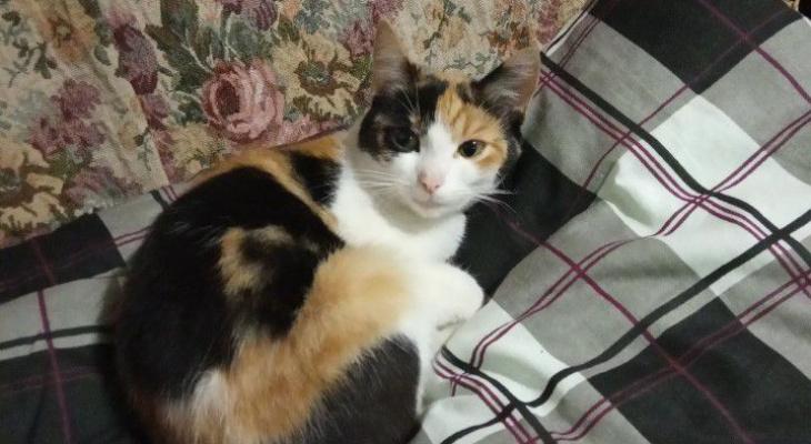 Кировчанин продает кошку за миллион рублей