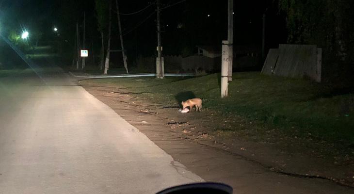 В Кировской области у детского сада лиса напала на женщину