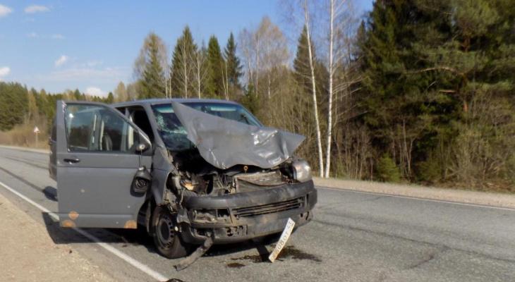 Трассы в Кировской области, где часто происходят ДТП с животными, назвали в ГИБДД