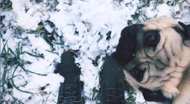 Фоторепортаж из соцсетей: в Кировской области выпал снег