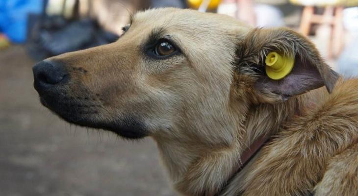 В Кирове бездомным животным «надели» желтые бирки