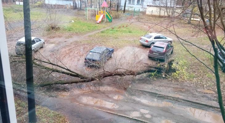 50 поваленных деревьев и три упавшие остановки: в кировской мэрии о последствиях непогоды