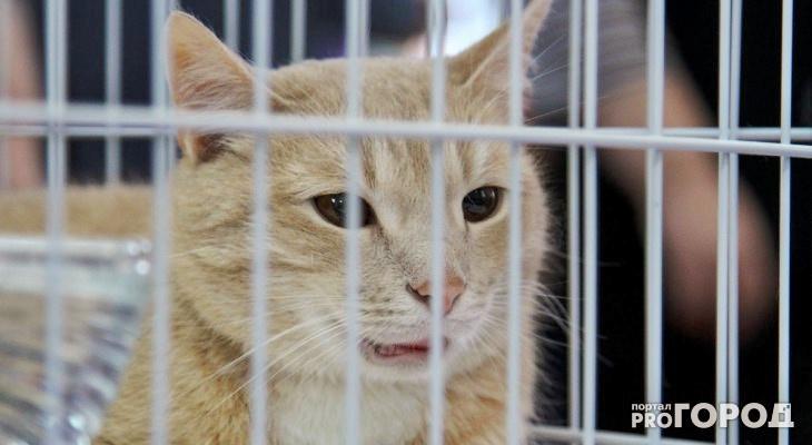 В Кировской области нашли бешенство у домашней кошки