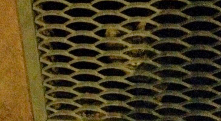 Из-за ремонта в подвале на Луганской замуровали кошек