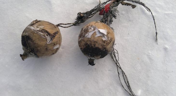 Сделал бомбу из находок в мусоре: в Котельниче задержали мужчину со взрывчаткой