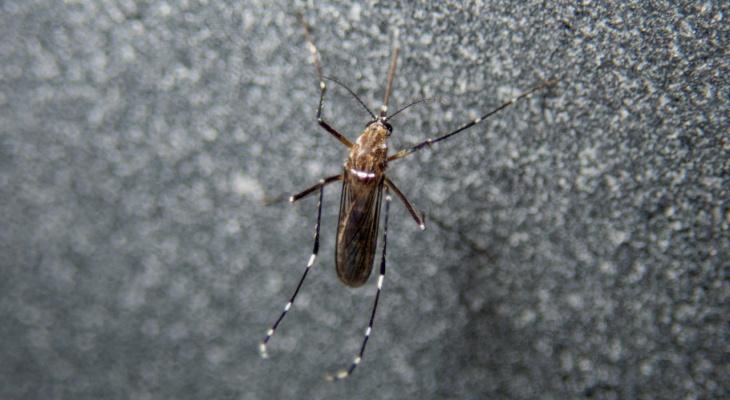 В РАН заявили о возможном исчезновении комаров из-за теплой зимы