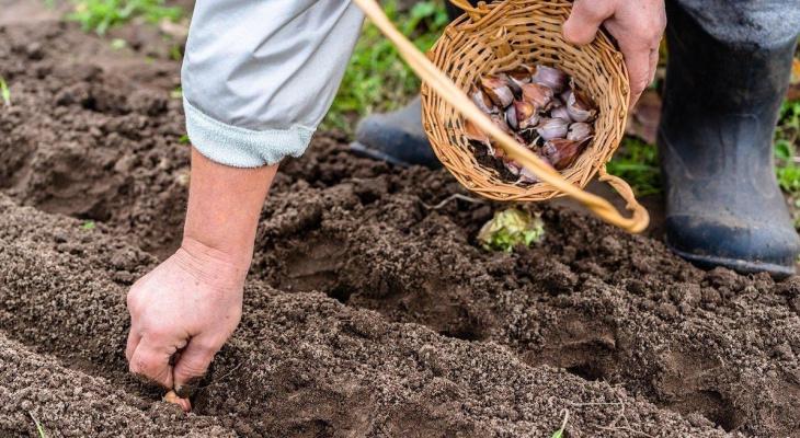 Календарь садовода 2020: что важно учесть до начала посадок?