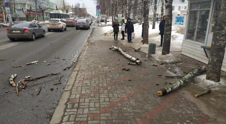 """""""Чуть людей не прибило"""": на остановку на Воровского упало дерево"""