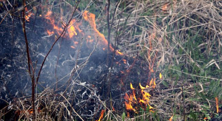 Пожар на 1000 квадратных метров: в Кировской области впервые в сезоне загорелась трава