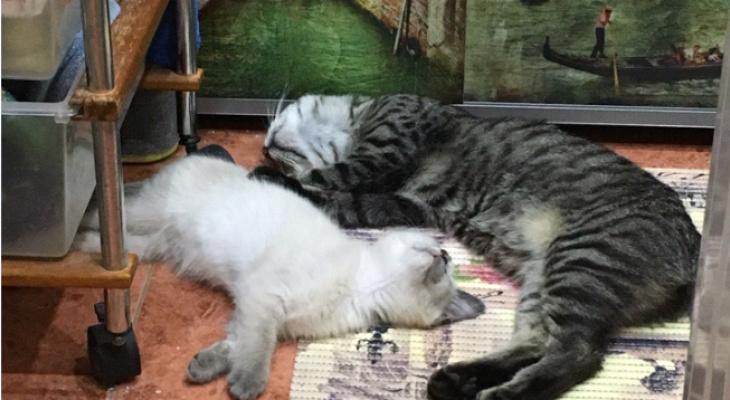 """""""Нам очень нужна помощь"""": волонтеры Кирова намерены построить приют для кошек"""
