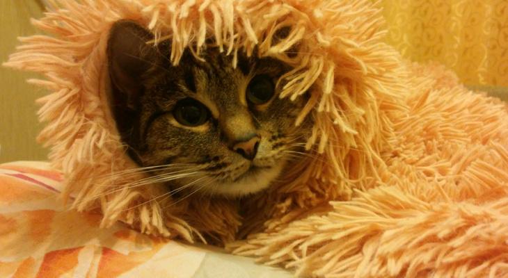 В Кирове ищут лучшее фото кота на карантине