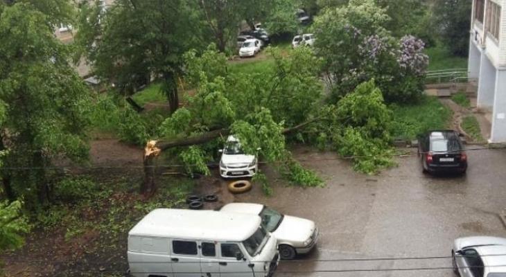 Деревья на машинах и остановка без крыши: последствия сильного ветра в выходные в Кирове