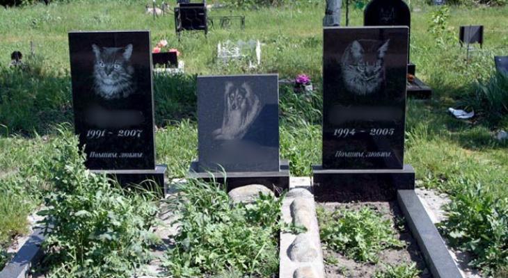 Кладбища в Кирове могут исчезнуть: какие методы захоронения животных могут появиться через 50 лет?