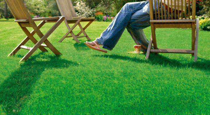 «Плохо растет»: кировские дачники отказываются сеять газон