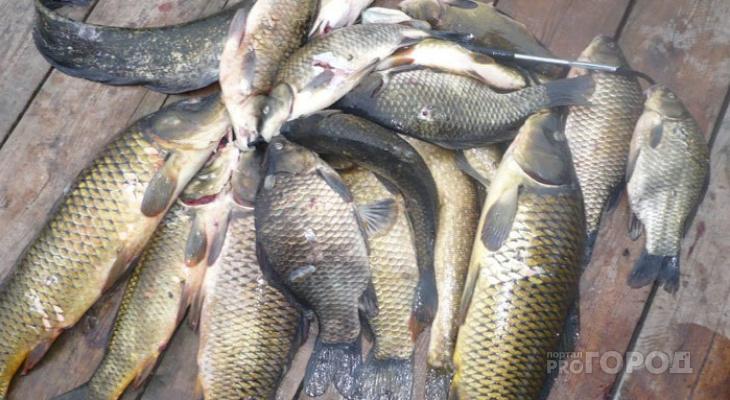 Куда стоит отправиться на рыбалку в Кировской области: советы рыбака