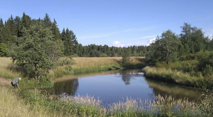 В одной из рек Кировской области массово начала погибать рыба