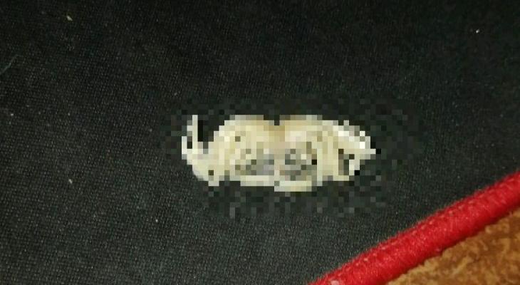 """""""Лицехват из """"Чужого"""": кировчанину в упаковке рыбы попалось непонятное существо"""