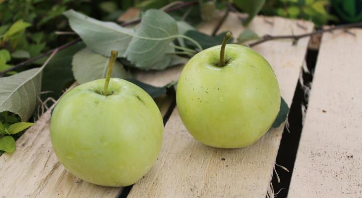 Как выбрать 3 сорта зимостойких яблонь, которые принесут большой и вкусный урожай