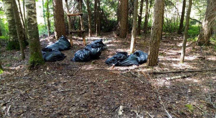 В чепецком лесу нашли трупы домашних животных: прокуратура провела проверку