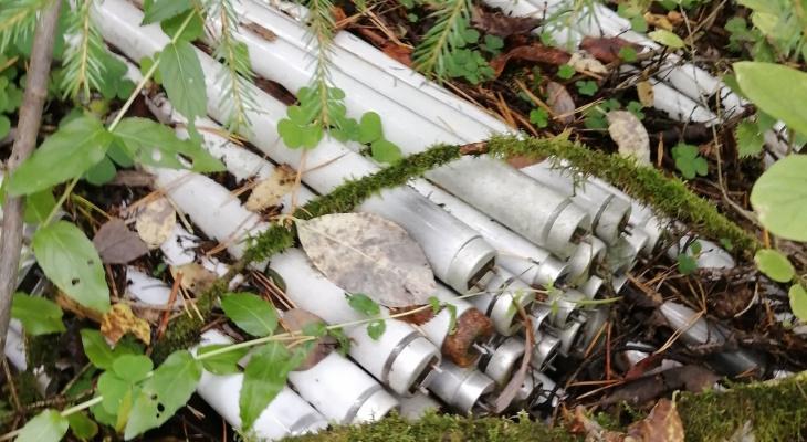 В лесу под Кировом обнаружили свалку с более чем сотней опасных ламп
